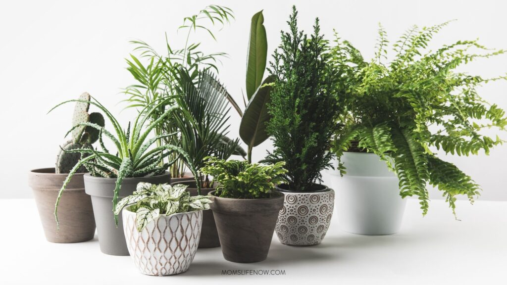 Houseplants That May Cleanse Indoor Air